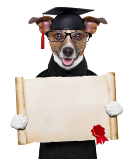 'dog','graduate','funny','animal','university','background','award','puppy','card','hat','diploma','poster','certificate','school','student','learn','academic','banner','blank','canine','college','copy','degree','document','educated','education','glasses','graduated','graduation','high school','humor','intelligent','isolated','jack russell','note','paper','pet','placard','professor','promotion','seal','smart','space','stamp','success','terrier','white background'
